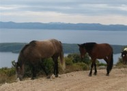 Photos from Hvar Adventure tours